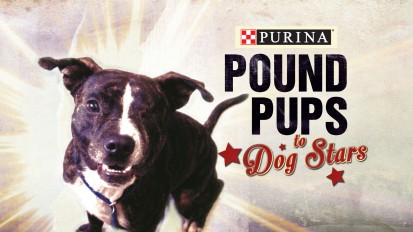 Pound Pups to Dog Stars